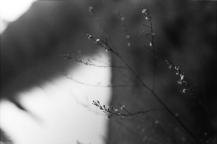 chianti, inverno 2015