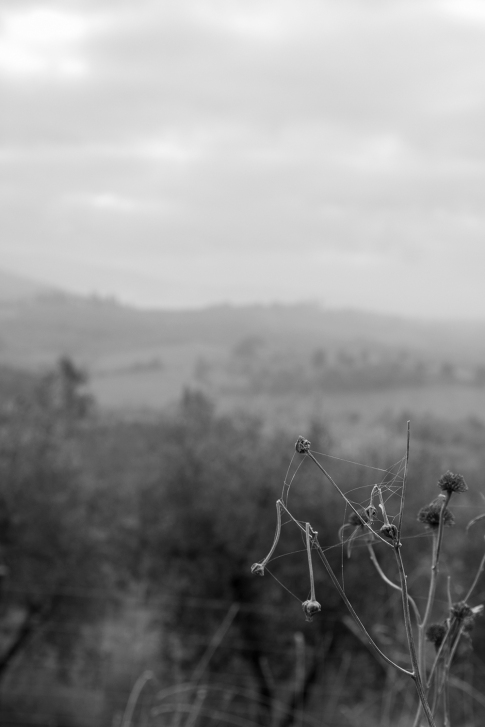 autunno tra le colline del Chianti, novembre 2015