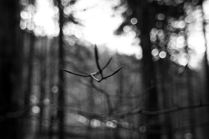 con la punta delle dita, foreste casentinesi, dicembre 2015