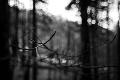 nudi, foreste casentinesi, dicembre 2015