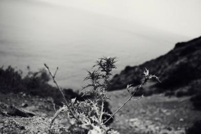 contemplare, Isola d'Elba, estate 2011
